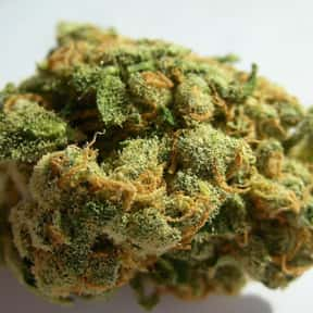 Jack Herer is listed (or ranked) 9 on the list The Best Types of Weed for Meditation