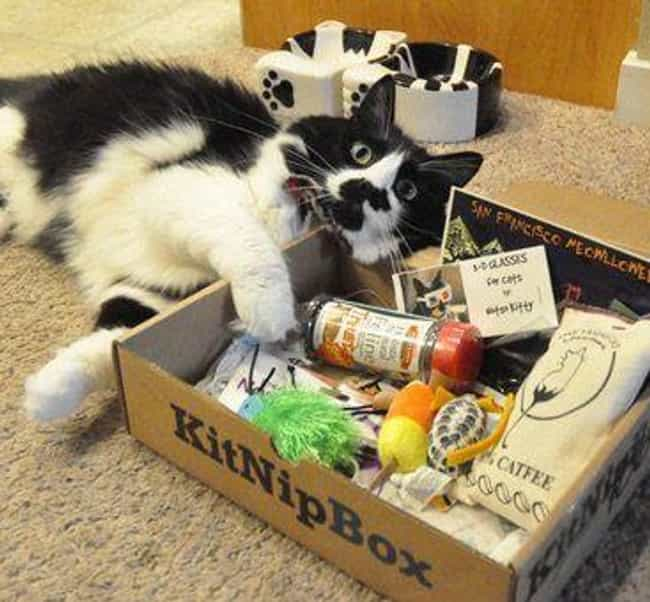 KitNipBox is listed (or ranked) 4 on the list The Best Subscription Boxes for Pet Owners