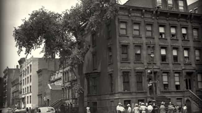 As Harlem Began To Change, The... is listed (or ranked) 4 on the list The Self-Made Prison Of The Collyer Brothers