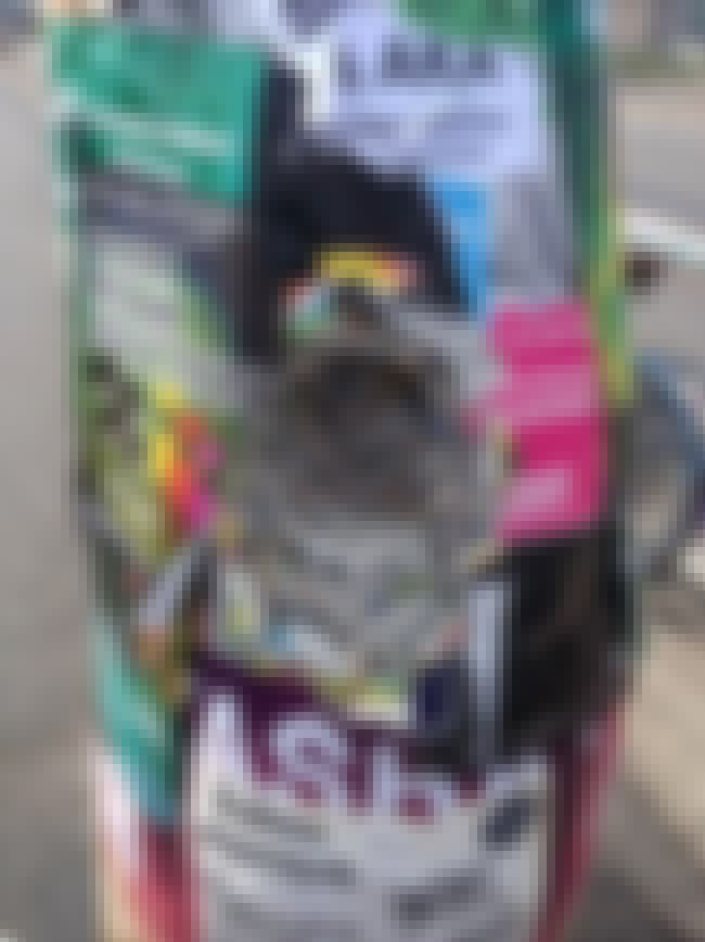 Layers Of Posters is listed (or ranked) 4 on the list Jaw-Dropping Pictures Of Things Being Worn Down Over Time