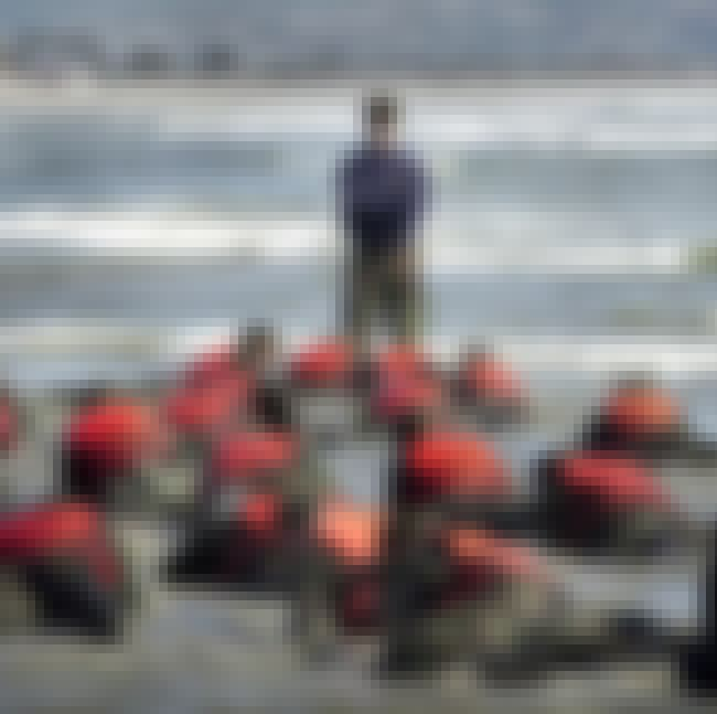 SEAL Prep School Ends With An ... is listed (or ranked) 2 on the list The Most Insane Parts Of Navy SEAL Training