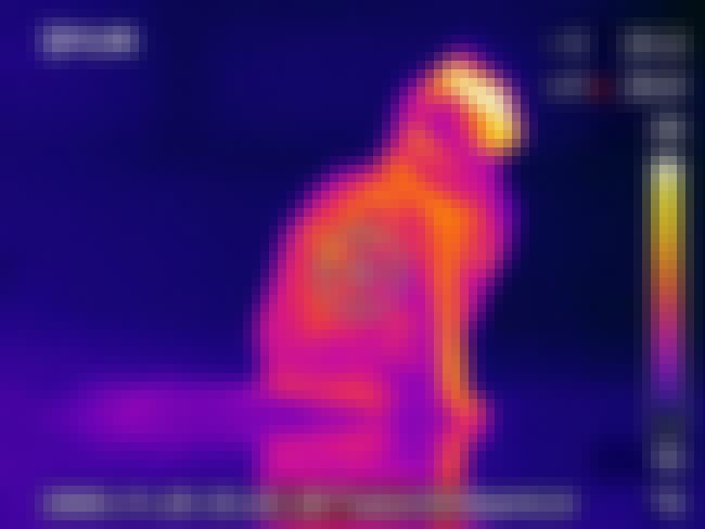FLIR Thermal Imaging is listed (or ranked) 2 on the list Interested In Ghost Hunting? Don't Waste Your Time With These 12 Devices