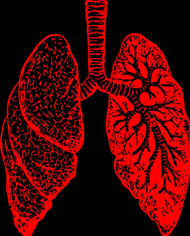 Lungs is listed (or ranked) 3 on the list How Every Vital Organ Keeps You Alive - And What Happens When It Stops Working