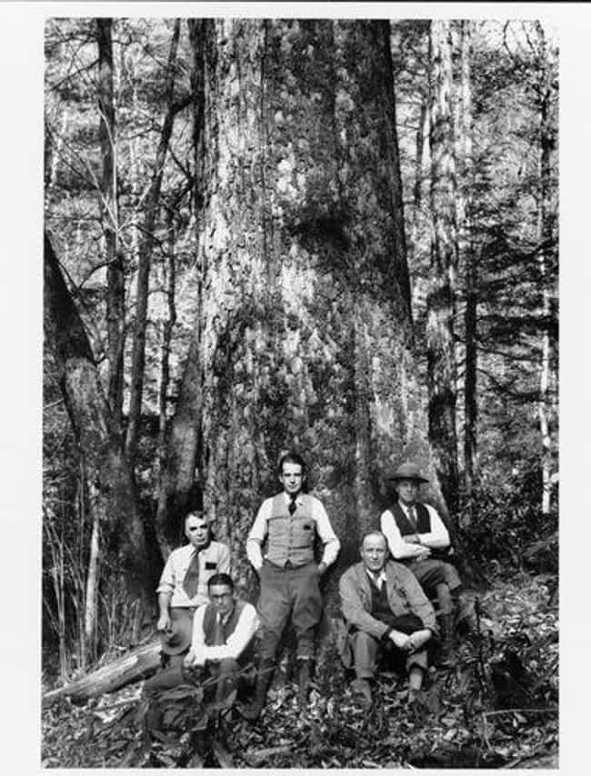 A Midnight Log Theft Tur... is listed (or ranked) 3 on the list In 1889, A Mob Murdered Green McCoy And Milt Haley Deep In The Hills Of West Virginia