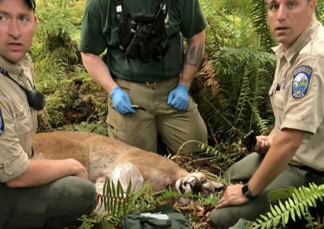 North Bend, Washington Attack:... is listed (or ranked) 1 on the list Every Fatal Mountain Lion Attack In US History