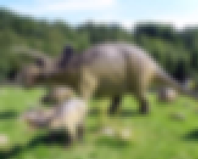 The Triceratops Kind Of Didn't... is listed (or ranked) 4 on the list Here Are All The Craziest Dinosaur Facts That Have Been Discovered Since You Were In School