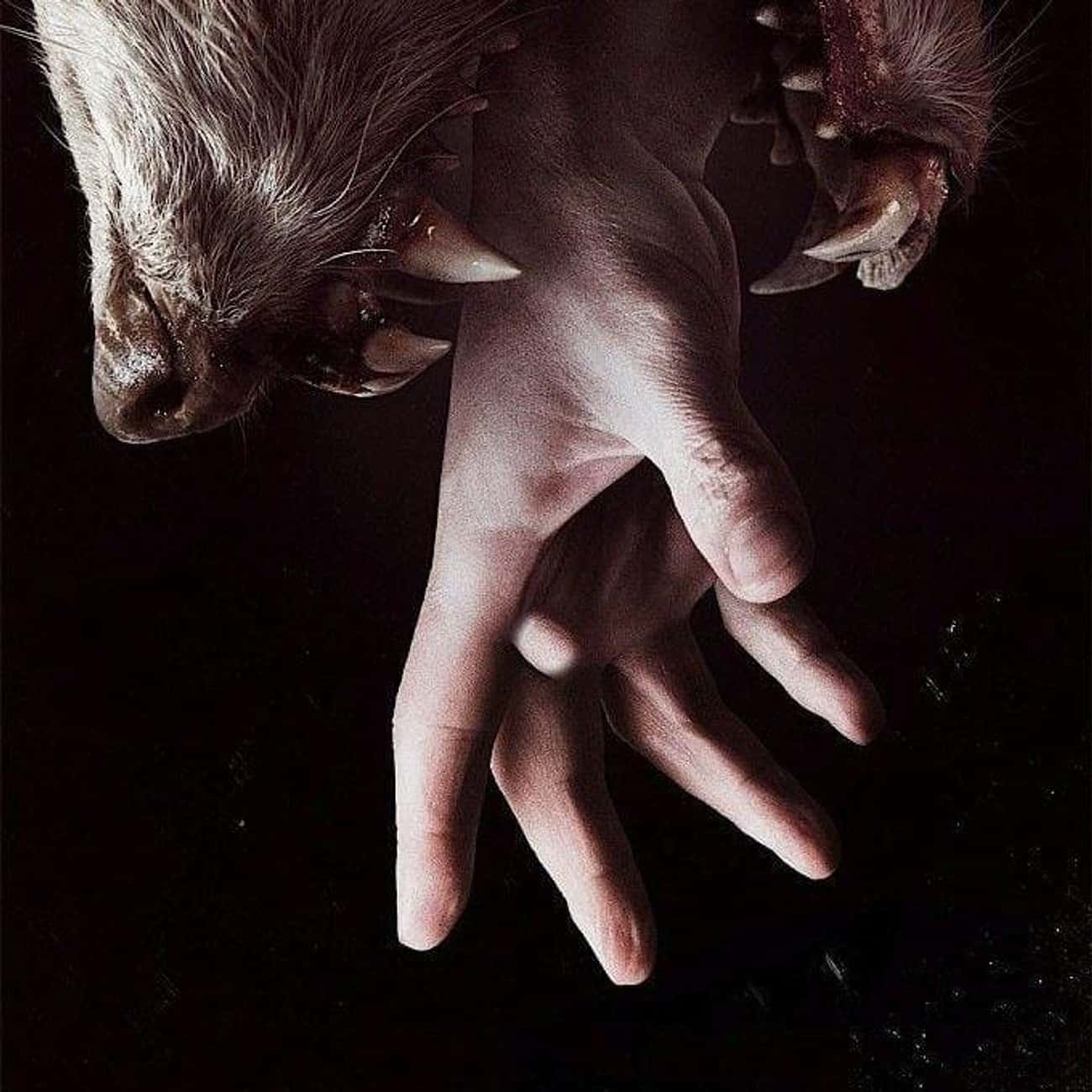 Hemlock Grove - Season 1 is listed (or ranked) 1 on the list Ranking the Best Seasons of 'Hemlock Grove'