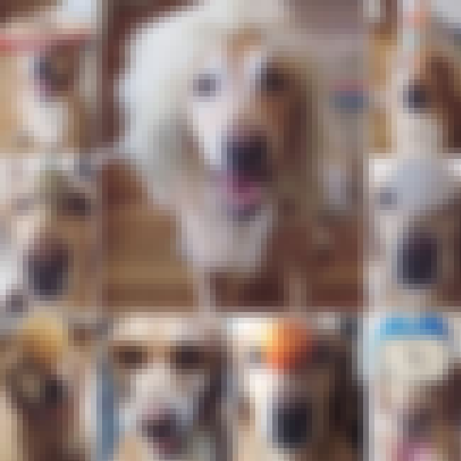 Cooper is listed (or ranked) 3 on the list Ranker Employee Pets