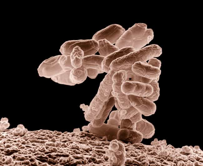 Carbapenem-Resistant Enterobac... is listed (or ranked) 2 on the list The Most Dangerous Drug-Resistant Diseases
