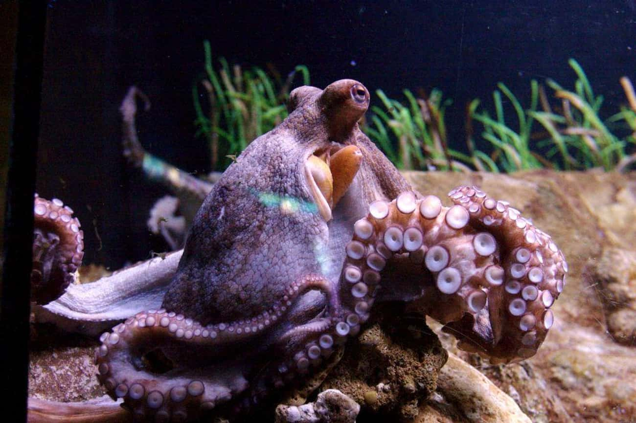 33 Scientists Published Their  is listed (or ranked) 1 on the list Researchers Claim Octopuses Are Alien Life Forms