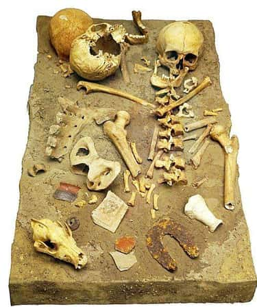 Animals Don't Really Have  is listed (or ranked) 1 on the list Human Bones Or Animal Bones? Here's How You Can Tell The Difference