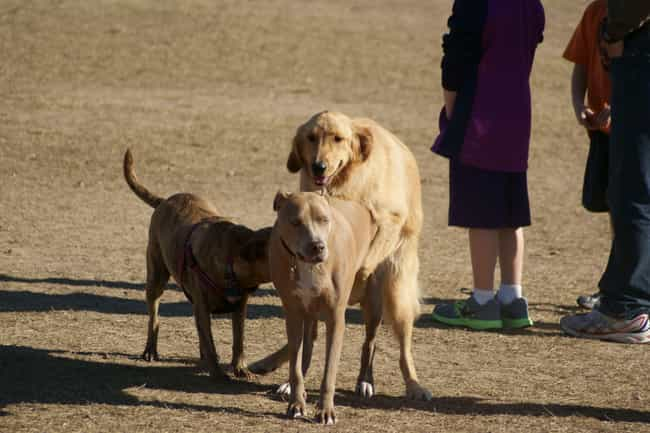 Los Angeles, CA: No Dog-Mating... is listed (or ranked) 4 on the list The Weirdest Laws In Small-Town America