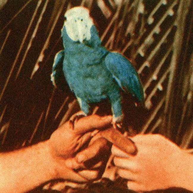 Are You Serious is listed (or ranked) 4 on the list The Best Andrew Bird Albums of All Time