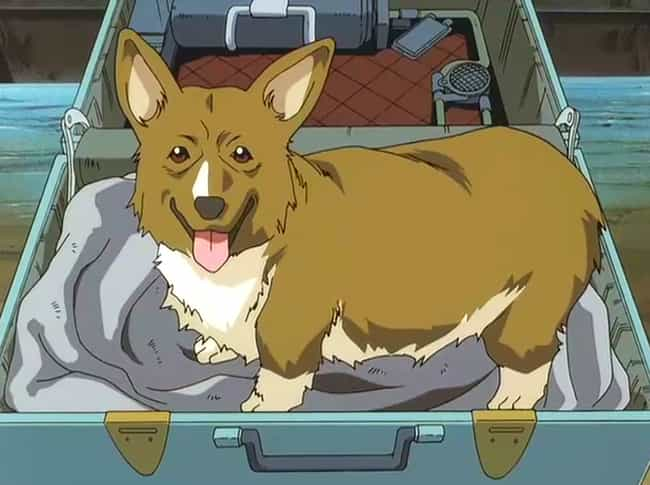 The 15 Greatest Anime Dogs Of All Time You Wish Were Yours
