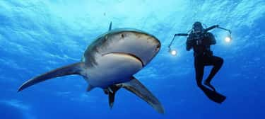 SharkFest Aims To Be More Scie is listed (or ranked) 1 on the list SharkFest Is Better Than Shark Week, And We Can Prove It