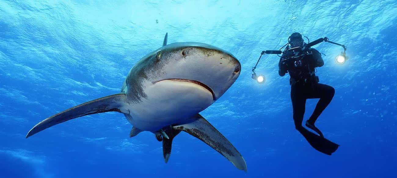 SharkFest Aims To Be More Scientific