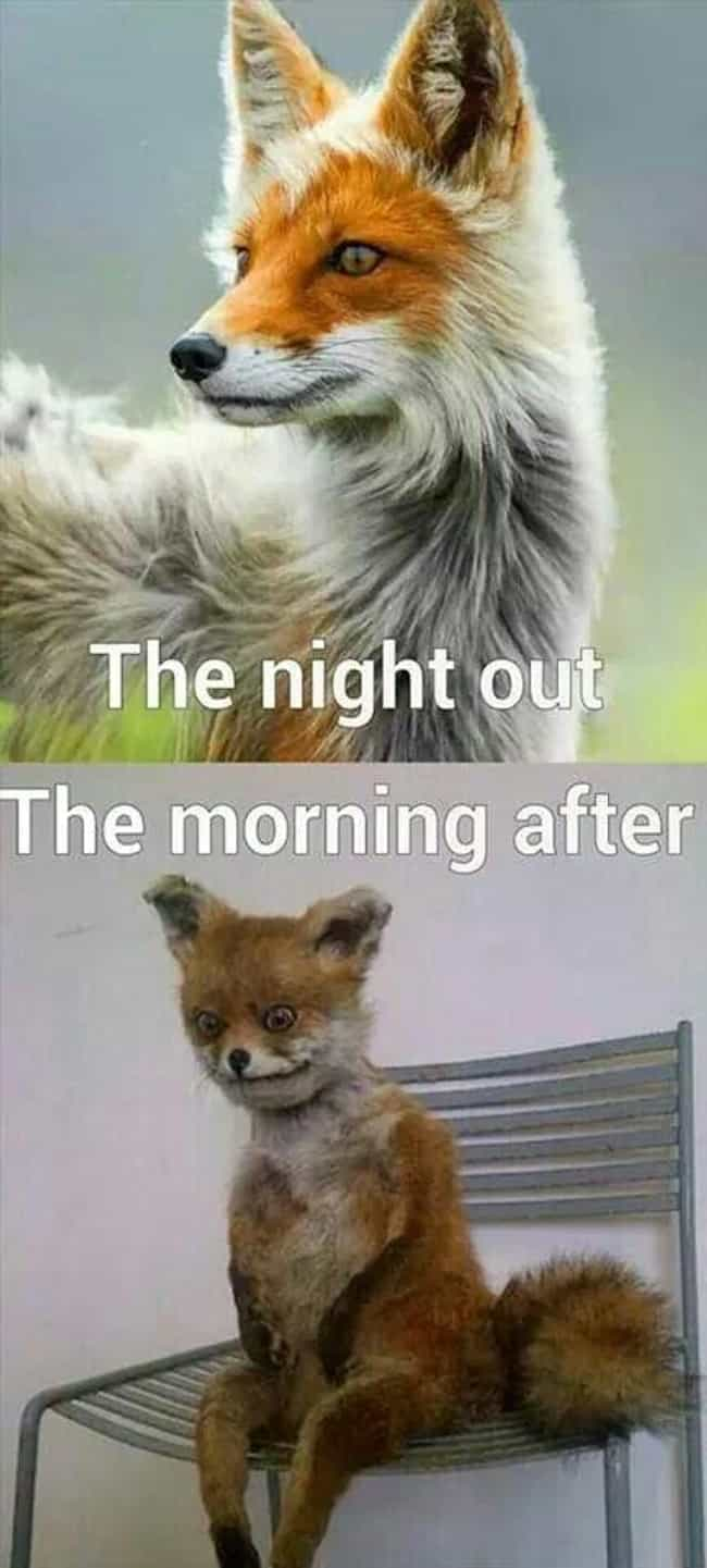 Feelin' Foxy is listed (or ranked) 4 on the list The Best Hangover Memes That Will Have You Reaching For Your Cane