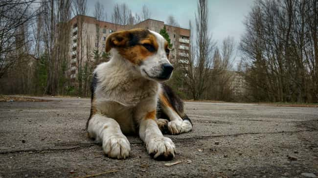 The Pups Will Still Need Help  is listed (or ranked) 10 on the list Hundreds Of Dogs And Puppies Live In Chernobyl—And You Can Adopt One