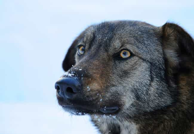 Cold Is More Of A Threat To Th... is listed (or ranked) 2 on the list Hundreds Of Dogs And Puppies Live In Chernobyl—And You Can Adopt One