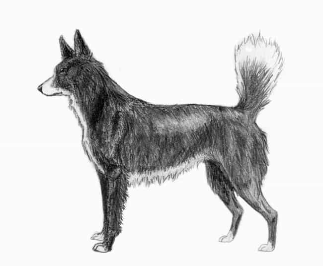 Tahltan Bear Dog is listed (or ranked) 4 on the list List Of Extinct Dogs from Scary to Cute