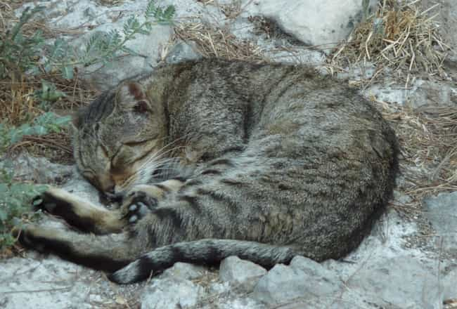 Dozing In The Ruins is listed (or ranked) 4 on the list There's A Sanctuary For Disabled Cats On The Site Julius Caesar Was Murdered –And You Can Adopt One
