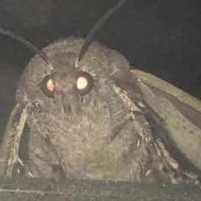 Moth Lamp is listed (or ranked) 22 on the list All The Things That Were A Thing In 2018, Ranked