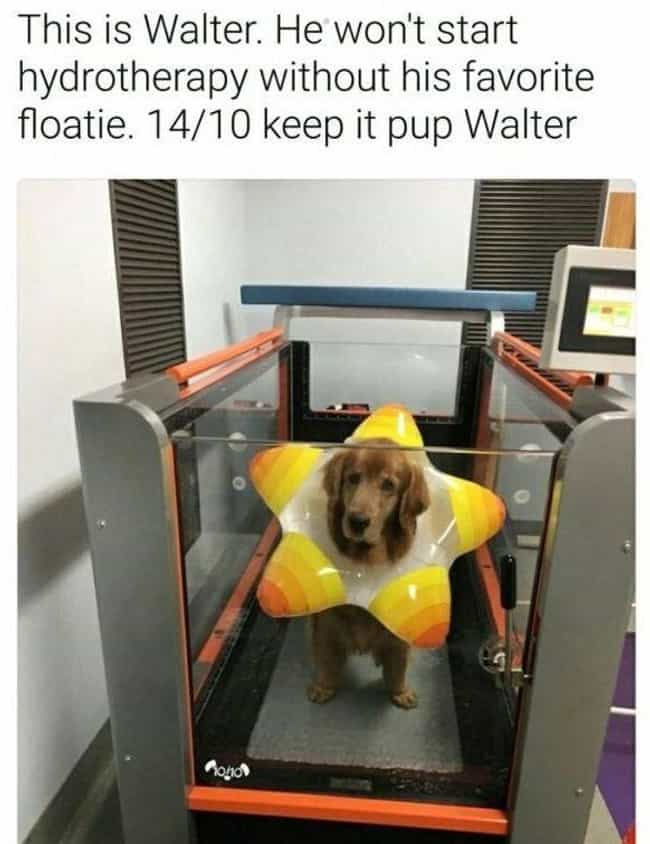 He's A Star is listed (or ranked) 2 on the list Wholesome Memes That Will Make You Laugh Every Time