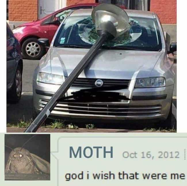 This Windshield Won is listed (or ranked) 4 on the list 17 Hilarious Moth Memes That Everyone's Talking About Lately