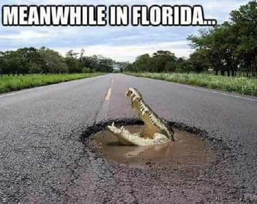 If There Is Water, A Gator Will Be There