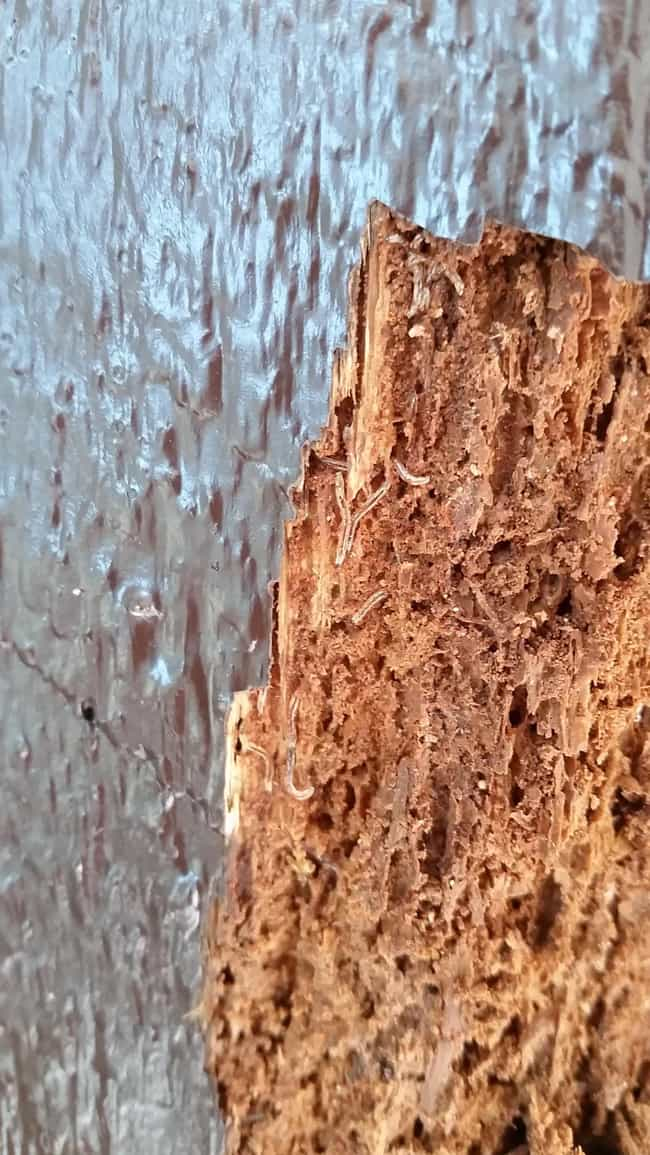 A Termite Feast is listed (or ranked) 2 on the list People On Reddit Share The Most Horrifying Termite Damage In Their Homes And Yards
