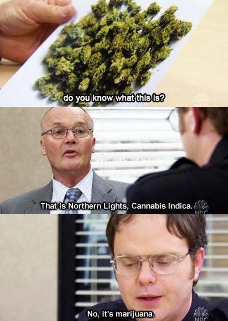 When He Is A Cannabis Connoisseur