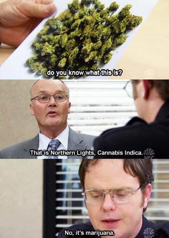 When He Is A Cannabis Connoiss... is listed (or ranked) 2 on the list The Best Creed Moments On 'The Office'