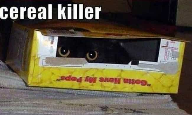 Truly Deadly is listed (or ranked) 3 on the list Morbid Serial Killer Memes You Really Shouldn't Laugh At