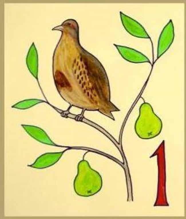A Partridge in Pear Tree... is listed (or ranked) 3 on the list Ranking What Your True Love Sent Over The Twelve Days Of Christmas