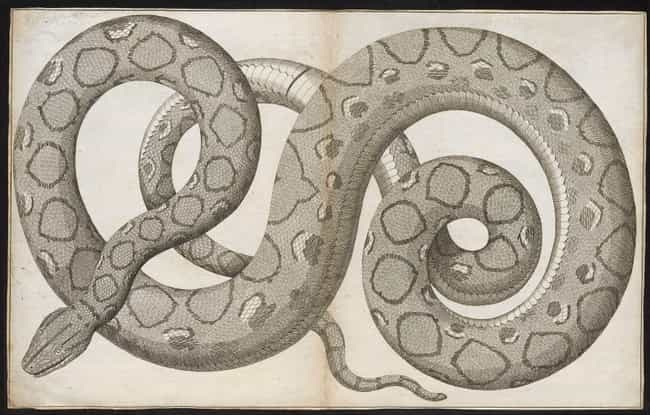 Experts Believe It Was The Lar... is listed (or ranked) 1 on the list If You're Afraid Of Snakes, You Definitely Don't Want To See The Prehistoric 40-Foot-Long Titanoboa