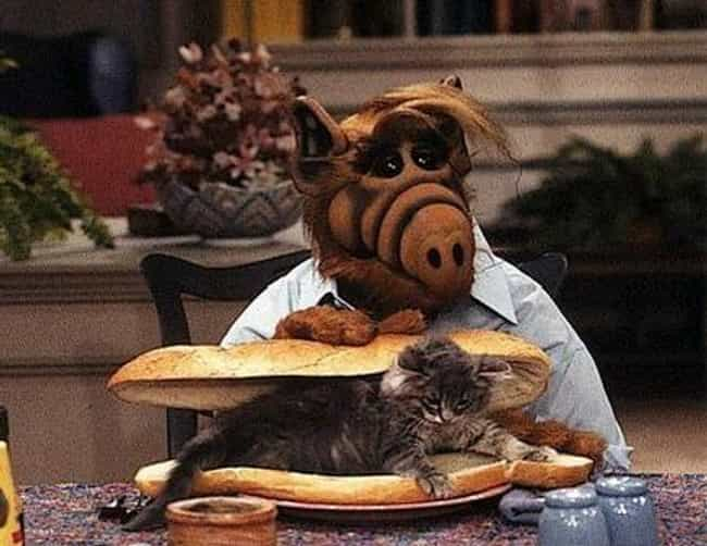 ALF Ate Cats is listed (or ranked) 1 on the list 'ALF' Is A Bizarre Fever Dream Of An '80s TV Show That's Way Darker Than You Remember