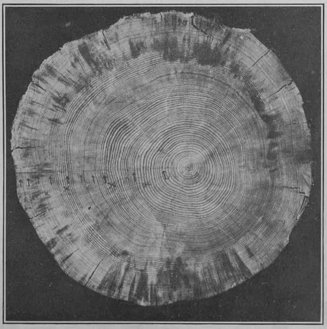 Tree               Rings Reveal How Much The is listed (or ranked) 12 on the               list Historians Agree 536 Was The Worst Year To Be Alive -               What Happened?
