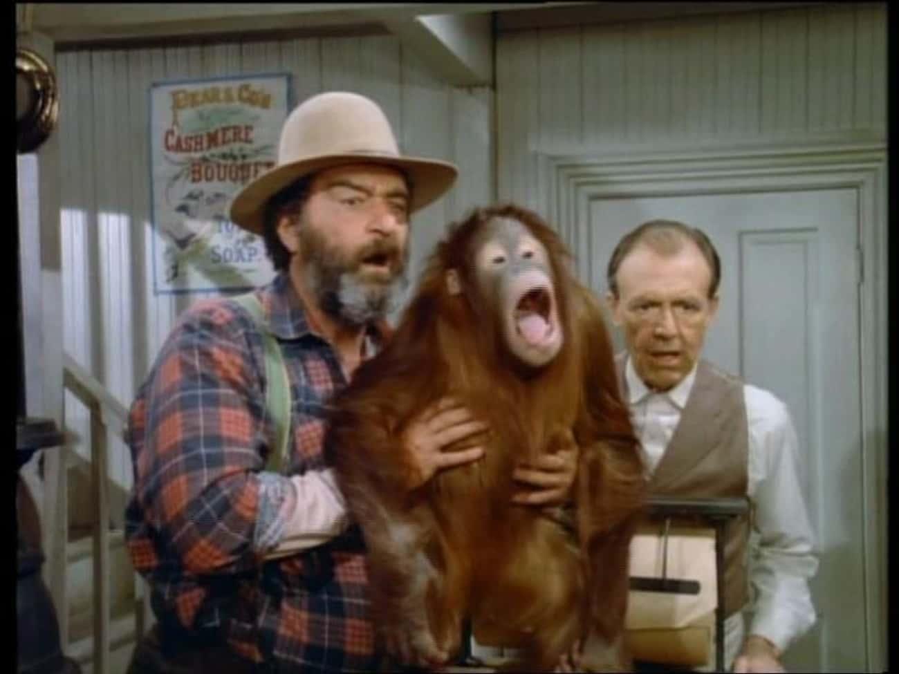 Mr. Edwards Adopts An Orangutan