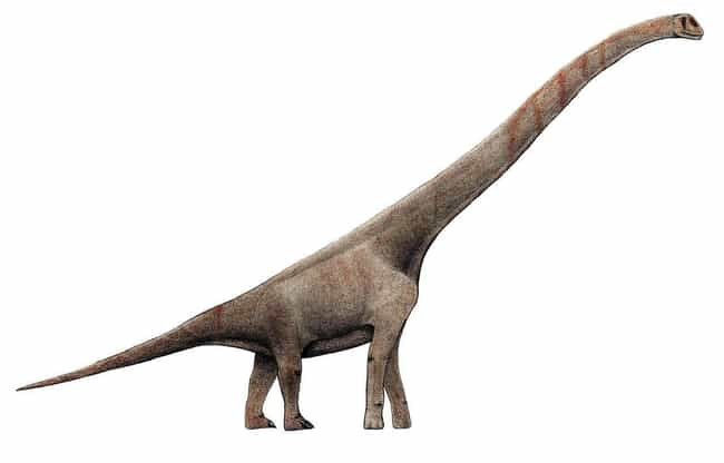 Sauroposeidon May Have B... is listed (or ranked) 4 on the list Mind-Blowing Facts About Dinosaurs That Make Us Question Everything
