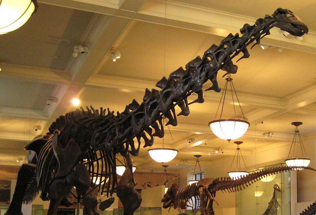 Some Dinosaurs May Have Had 300-Year Lifespans