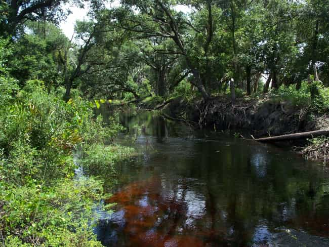 The Boggy Creek Monster is listed (or ranked) 2 on the list Crimes, Myths, And Horror Stories From The Ozarks