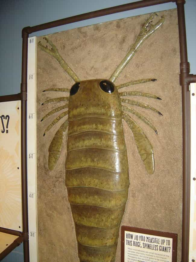 They Could Grow Larger T... is listed (or ranked) 3 on the list A Look At The Ancient Giant Sea Scorpion With An Arm-Length Claw That Could Impale You