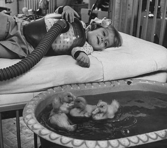 1956: Ducklings Comforting A Y is listed (or ranked) 9 on the list Utterly Fascinating Photos That Weren't In Your History Textbooks
