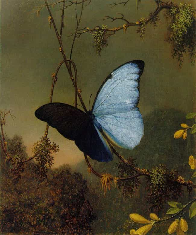 A Blue Butterfly Is Foll... is listed (or ranked) 3 on the list 10 Signs You're Being Pursued By Lilith