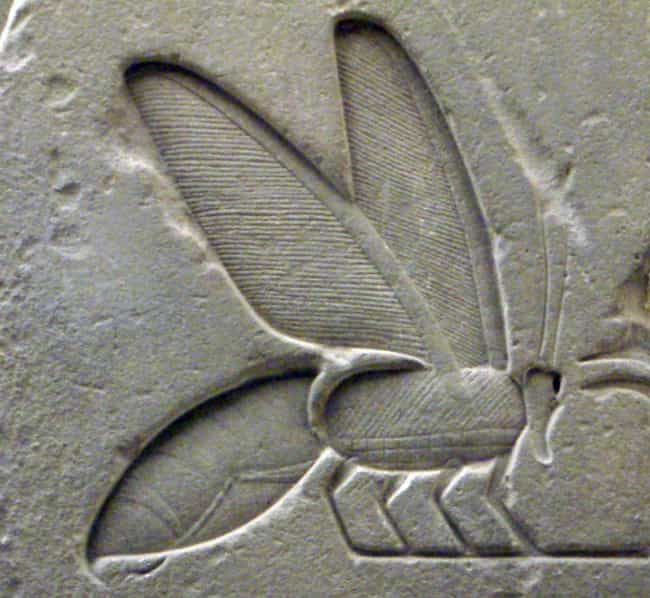 Honey Was One Of The Most Priz... is listed (or ranked) 1 on the list What Did The Ancient Egyptians Actually Eat?