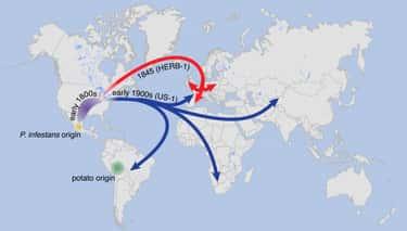 1844: The Blight Begins Overseas
