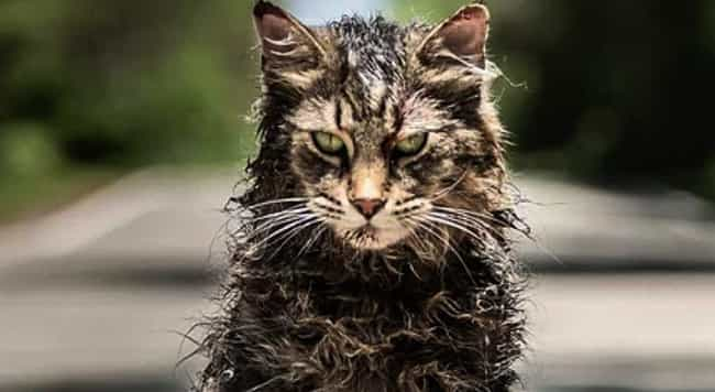 Church Lures Ellie To Her Deat... is listed (or ranked) 1 on the list 10 Fan Theories And Predictions For 'Pet Sematary'