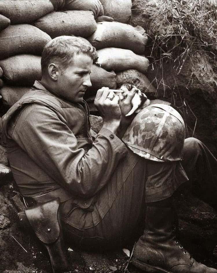 A Marine Hand-Feeding A Kitten During The Korean War, 1952