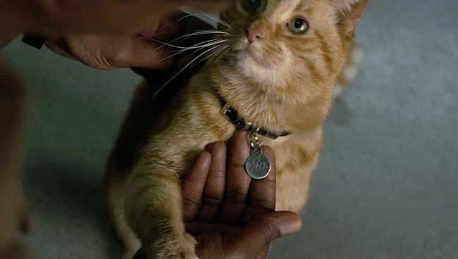Goose Was Renamed From '... is listed (or ranked) 1 on the list The Comic Book History Of Flerkens And Captain Marvel's Scene-Stealing Feline Pet, Goose