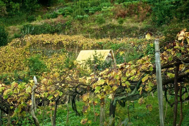 Washington Had An Affinity For Madeira Wine